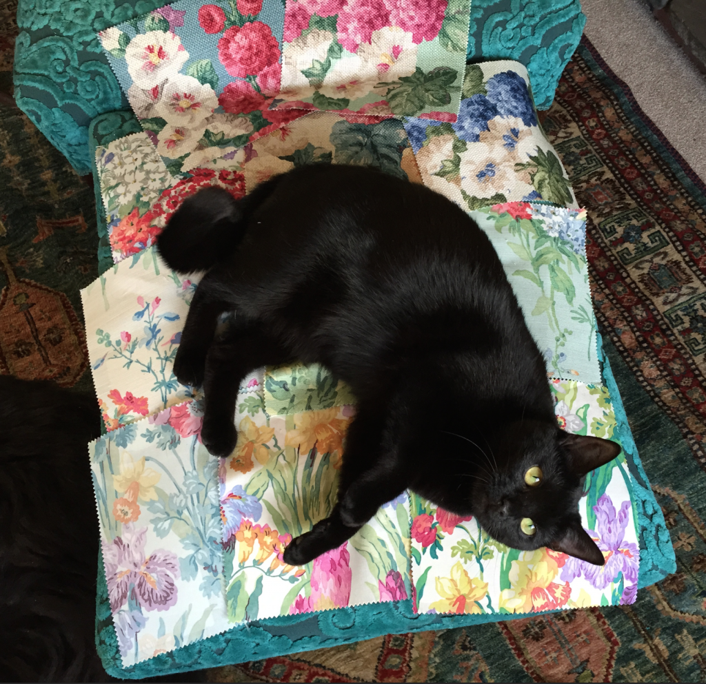 Mad Dotty Cat helping me choose my favourite Sanderson Vintage II fabrics