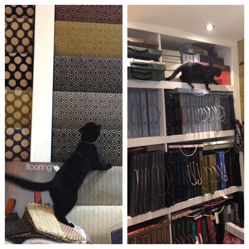 Up to mischief around the shop