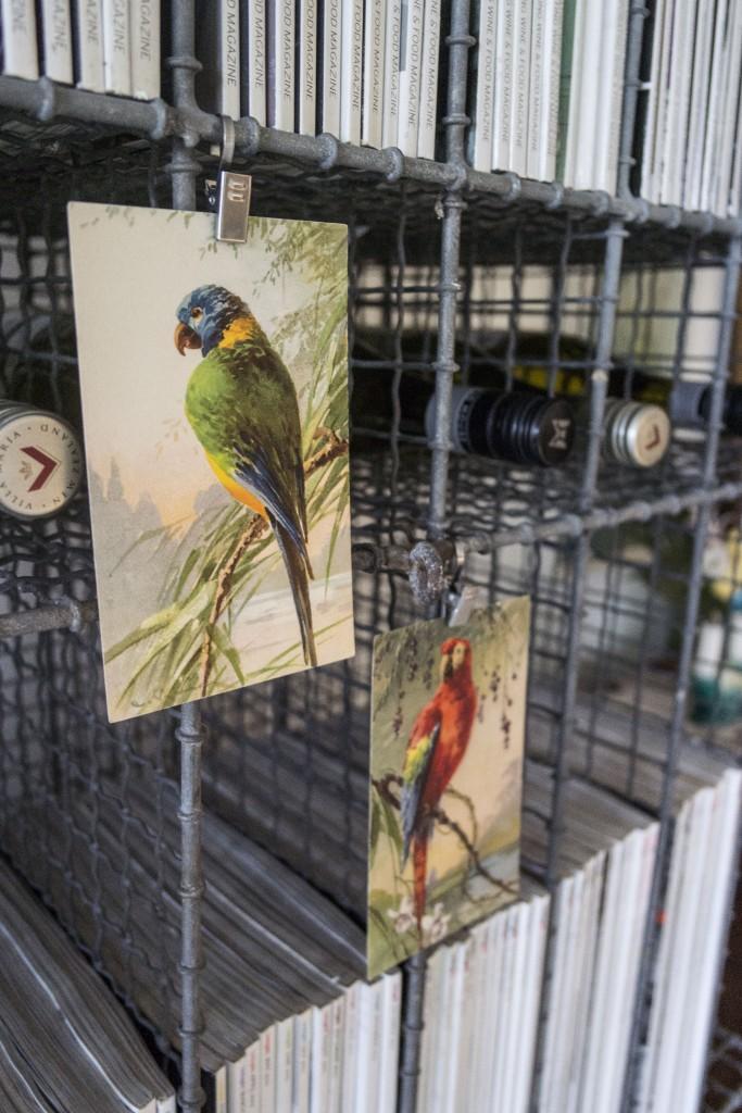 Vintage parrot postcards