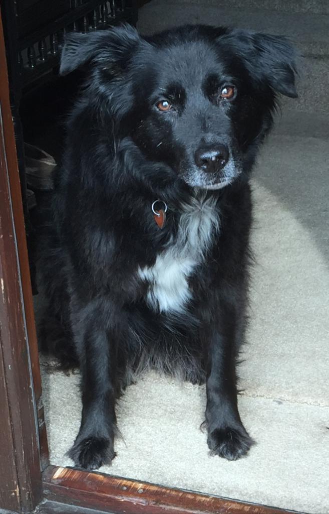 Tilly at door