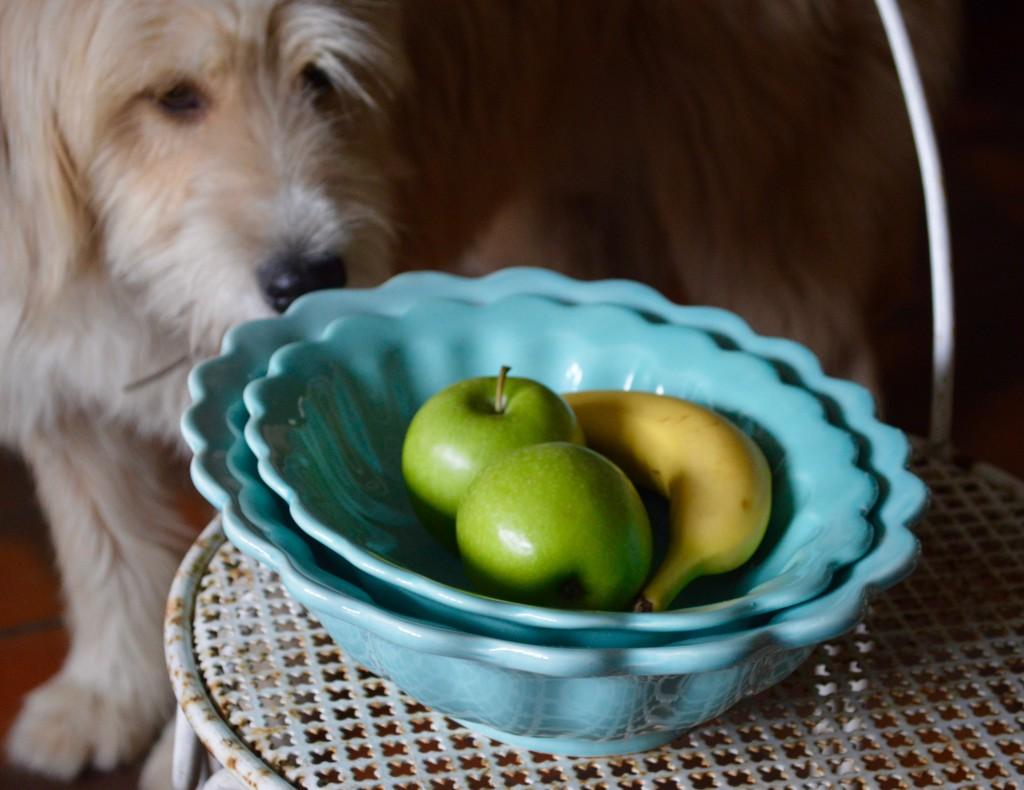 Flossie & bowls 1