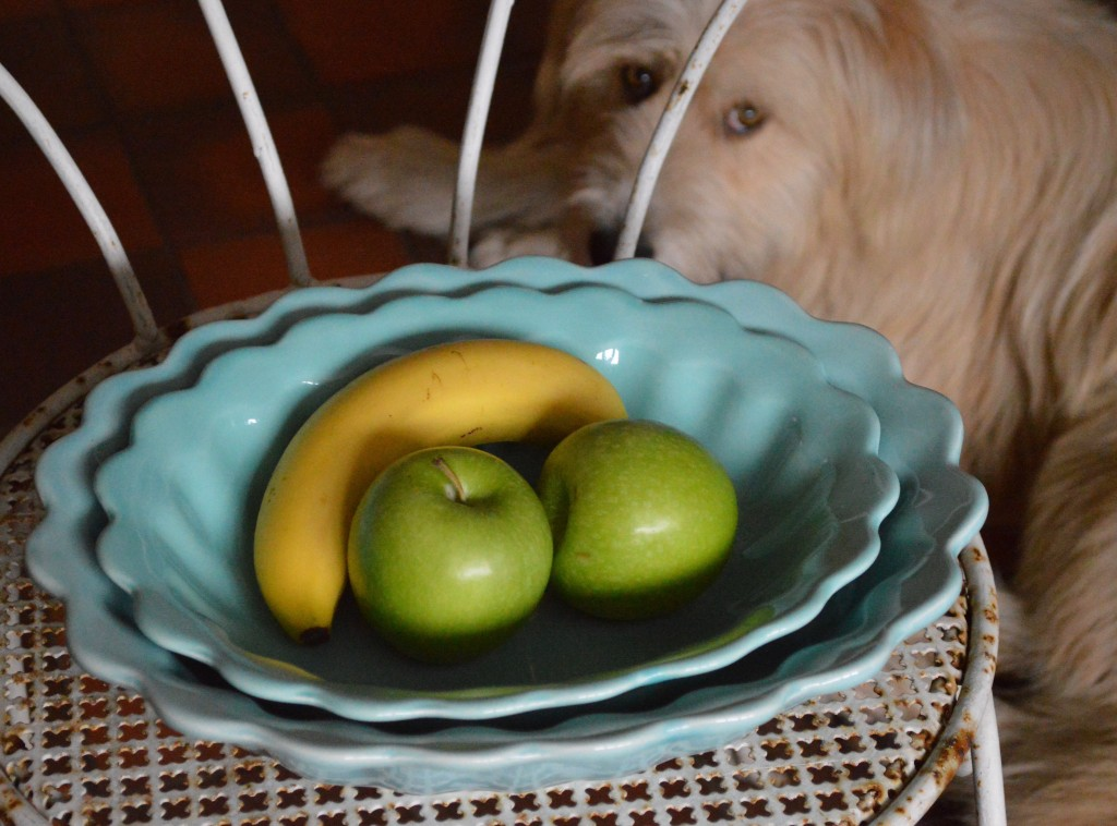 flossie & bowls 2