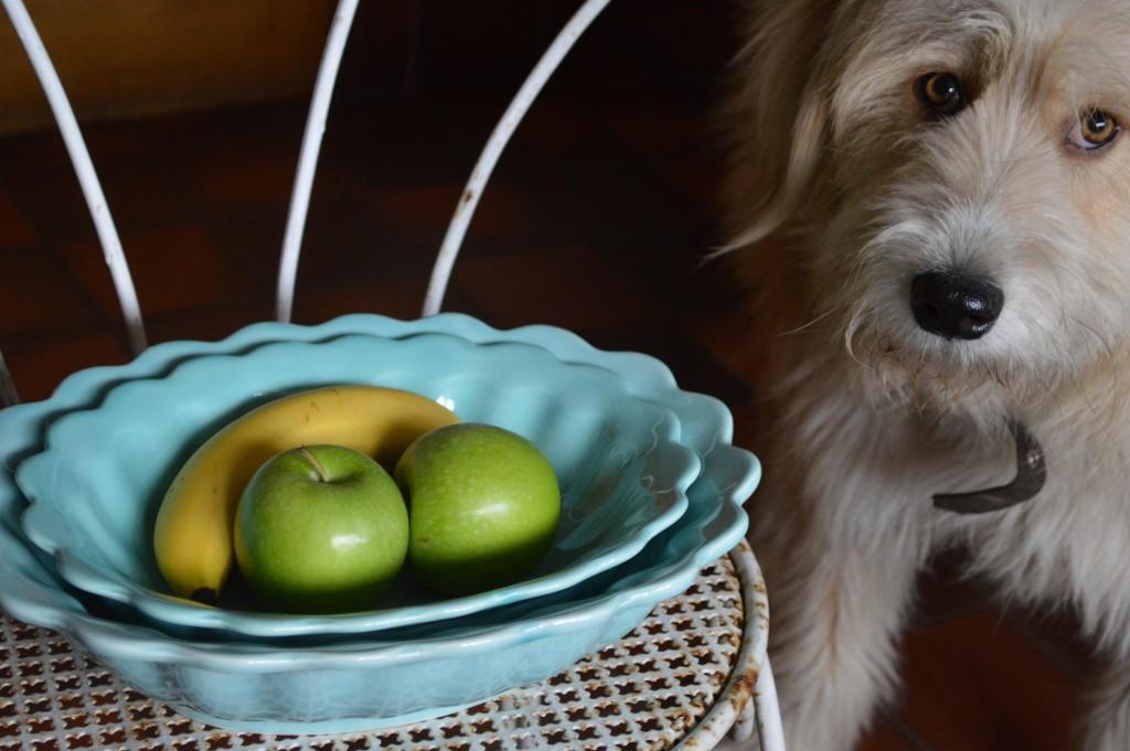 flossie & bowls 3